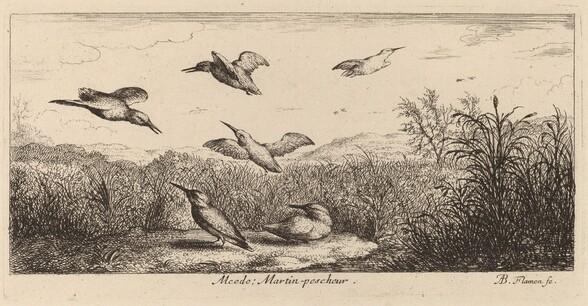 Alcedo, The Kingfisher