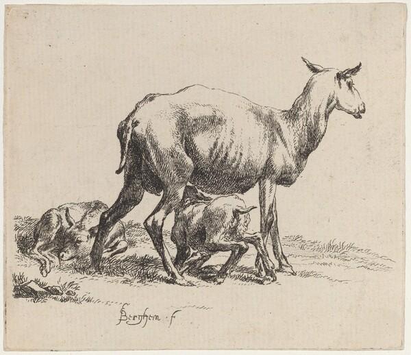 Ewe Nursing Her Lamb