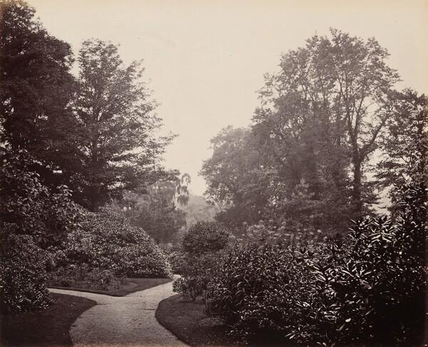 Pathway in Alexandra Park