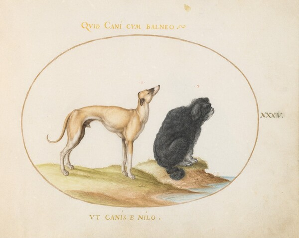 Plate 35: A Hound and a Water Spaniel