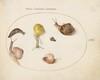 Plate 62: A Slug with Snails