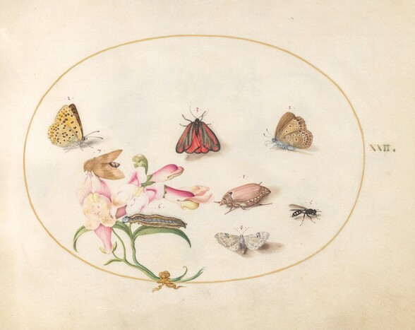 Plate 22: Butterflies with Other Insects and a Snapdragon