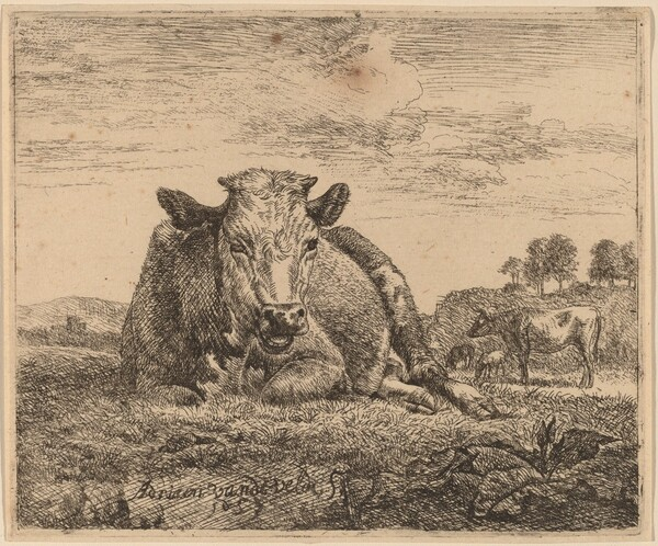 Recumbent Cow