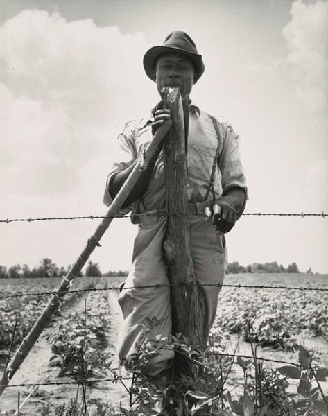 Negro sharecropper with twenty acres. He receives eight cents a day for hoeing cotton. Brazos riverbottoms, near Bryan, Texas