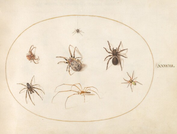 Plate 38: Seven Spiders