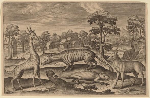 A Giraffe, a Chameleon, a Civet and an Antelope