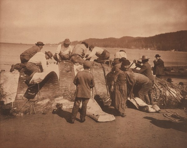 Indian Whalers Stripping Their Prey at Neah Bay