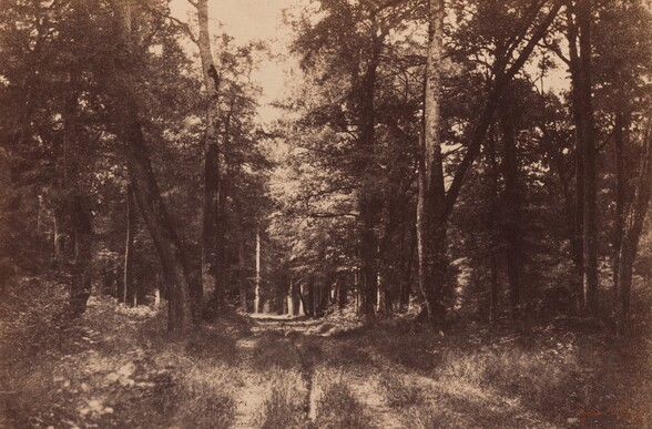 Bas-Breau, Forest of Fontainebleau