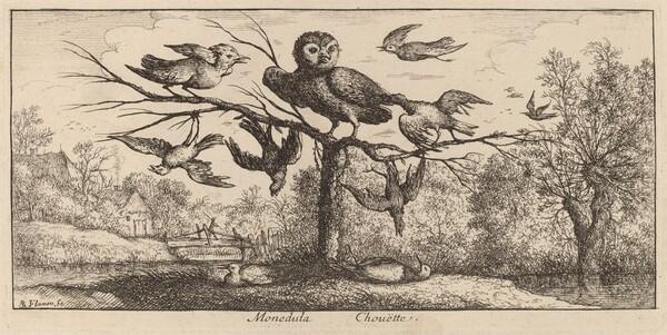 Monedula, The Owl
