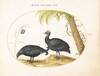 Plate 11: Pair of Guinea Fowl with Palm Tree and Fritillaria