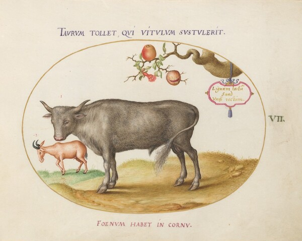 Plate 7: A Bull and a Horned Animal