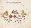 Plate 51: Murex Mollusks, Shells, Hermit Crabs, a Slug, Insects, and Other Sea Life