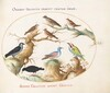 Plate 51: Crossbeak, Chough, Bee-Eater, and Other Birds