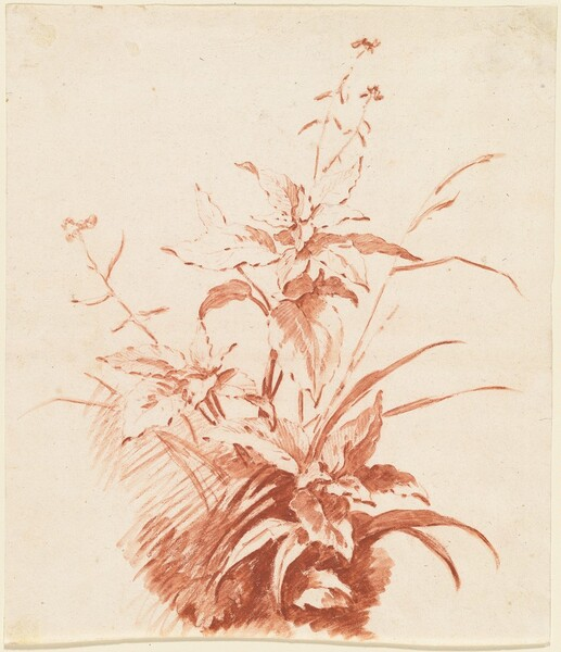 Flowering Plant with Grass