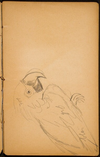 Papagei (A Parrot) [p. 17]