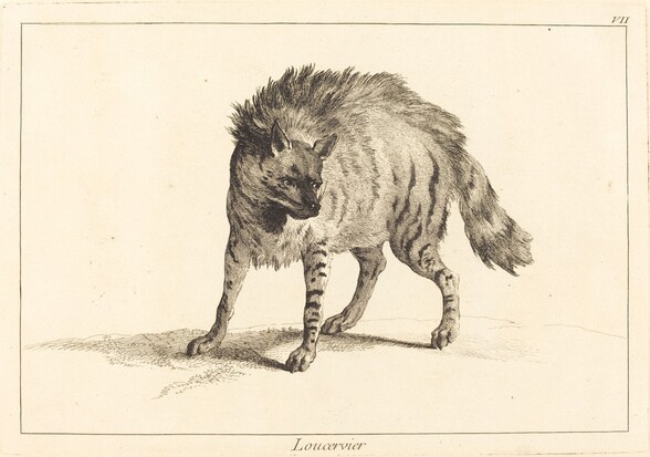 Loucervier (Hyena)