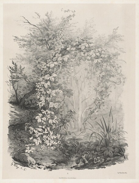 Plants and Ivies by a Stream