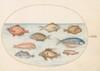 Plate 18: Boarfish, Razorfish, Butterfish, a John Dory, and Other Fish