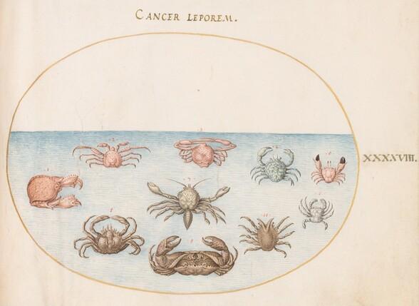 Plate 48: Ten Crabs