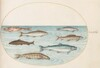 Plate 40: Salmon, Trout, and Freshwater(?) Fish