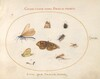 Plate 18: Two Butterflies and a Moth with a Dragonfly, Two Ants, and Four Other Insects