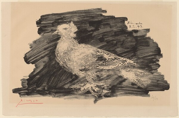 Pigeon with Gray Background (Pigeon au fond gris)