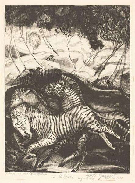 Zebras: Nature