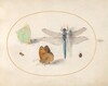 Plate 17: Brimstone and Meadow Brown(?) Butterflies, a Dragonfly, and Two Small Insects