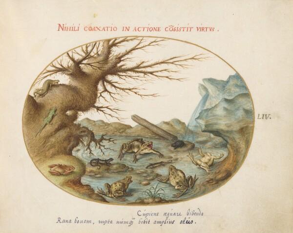 Plate 54: Frogs in a Landscape