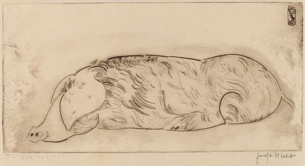 Hog (Cochon)