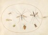 Plate 59: Seven Insects, Including a Hawthorn Shield Bug, Crane Flies, and a Hoverfly