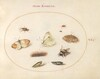 Plate 20: Three Butterflies, a Caterpillar, a Bee, Two Chrysalides, and Three Weevils