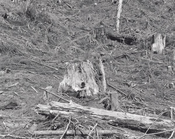 Kerstin, Old-Growth Stump, the Last Evidence of the Original Forest, Clatsop County, Oregon