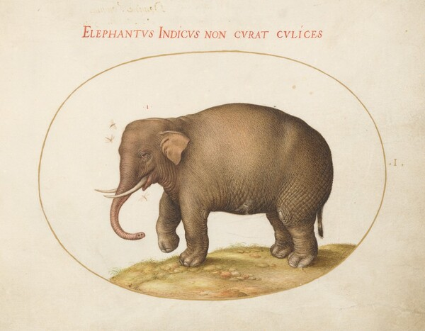 Plate 1: Elephant with Insects