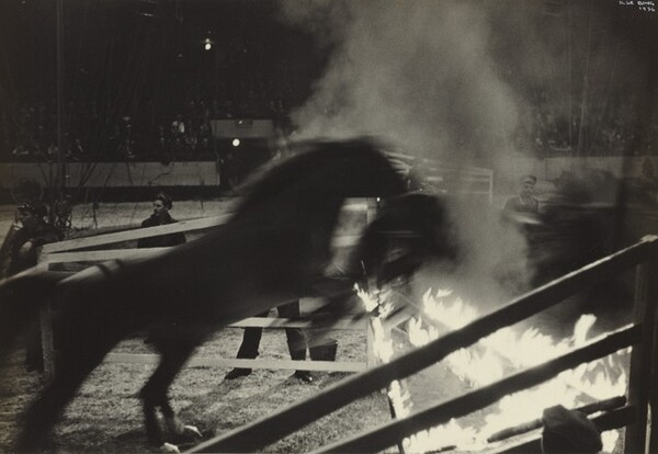 Horse Act, Circus, New York