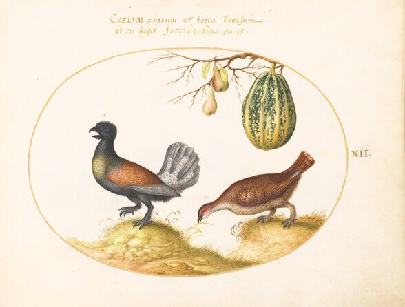 Plate 12: Pair of Wood Grouse with a Melon and Pears