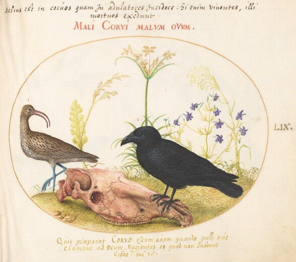 Plate 59: Curlew and Crow with Horse Skull