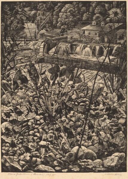 Kleine Glockenblume (Small Bellflowers)
