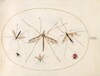 Plate 57: A Ladybug, a Fly, and Four Other Insects