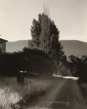 image: House and Poplars, Lake George