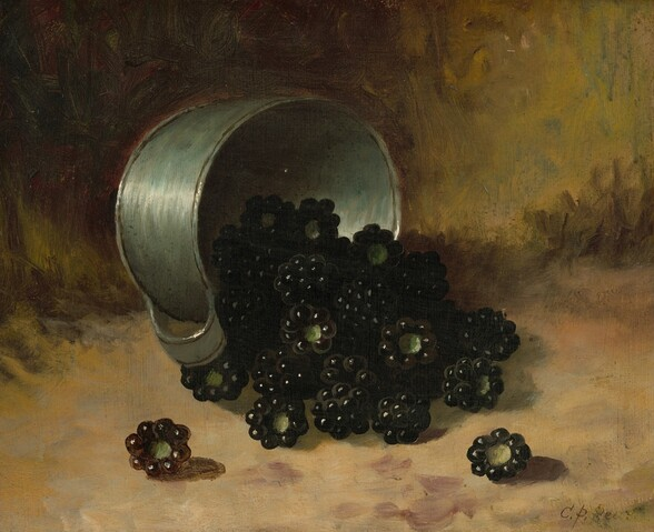 Blackberries Spilling from Tin Cup