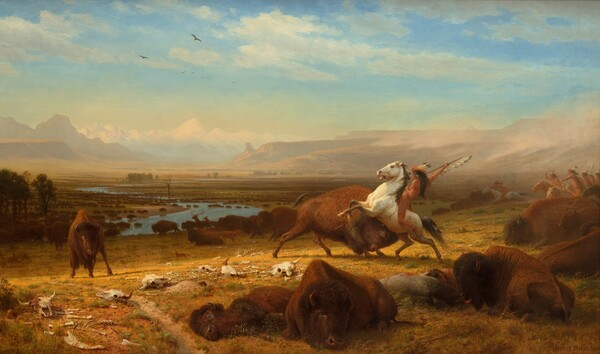 """A band of indigenous Americans ride horses toward and through a herd of buffalo, which spreads along a river that winds through plains to mountains in the deep distance in this horizontal landscape painting. The scene is lit with golden light that warms the browns and harvest yellow of the landscape. Several dead or injured buffalo lay across the ground close to us, along with the body of one hunter, barely visible between the bodies of two animals. Just beyond the corpses, one hunter rides a rearing white horse as he lifts a spear lined with feathers high over a charging buffalo to our right of center. Facing away from us, the rider has light brown skin and a feather headdress over long dark hair. He wears a pumpkin orange loincloth and red and orange bands encircle the ankle, thigh, wrist, and upper arm facing us. Sage green grass grows in tufts on the dirt ground, which is littered with several animal skulls around the charging buffalo and rider. A smaller buffalo looks on from our left, and a prairie dog pokes its head out of hole in the ground in the lower left corner. A little distance away to our right, along the edge of the canvas, seven hunters gallop into the scene, leaning forward over their horses' necks. The dozen or so buffalo nearby, as well as a fox and two deer, move away from the hunters, toward our left. Hundreds of buffalo dot the landscape along the banks of the winding river and wade in the water. A few trees rise on the plain but the land is mostly flat until it reaches the mountains and cliffs along the horizon, which comes halfway up this composition. What appears to be a line of clouds in the deep distance could be far-off, snow-covered mountains. A few wispy white clouds float across the watery blue sky above. The artist signed the work in the lower right corner: """"Albert Bierstadt."""""""