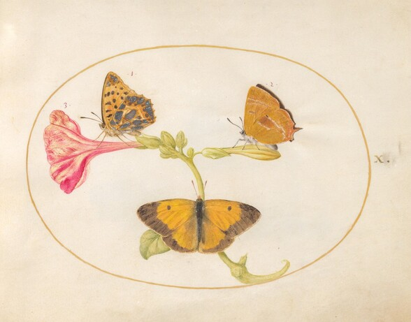 Plate 10: Brown Hairstreak, Silver-Washed Fritillary, and Clouded Yellow Butterflies on a Four-o