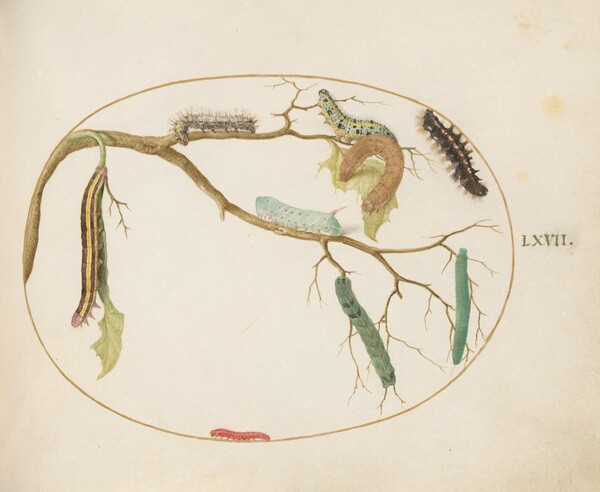 Plate 67: Large White and Small White Butterfly Caterpillars, Hornworm Caterpillar, Broom Moth Caterpillar, and Others