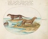 Plate 40: Two Otters and a Beaver