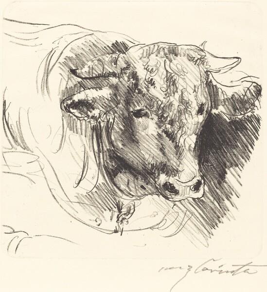 Stierkopf (Head of a Steer)