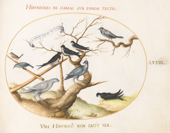 Plate 68: A Ptarmigan, Swallows, and Other Birds