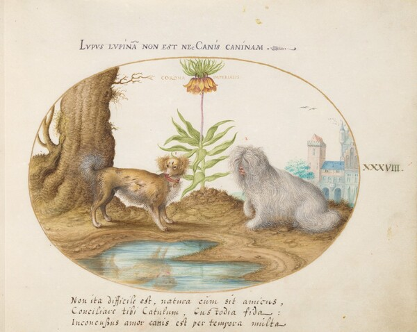Plate 38: Two Small Dogs with a Crown Imperial