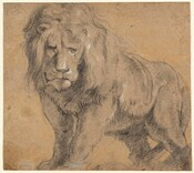 Drawn with black chalk with white highlights on beige paper, a male lion with a full, wavy mane looks out toward us on this nearly square drawing. He stands with his body angled away from us to our right but his head faces us, his eyes looking slightly off to our right. His front paws are together and his back feet slightly separated with his tail curled loosely down between his legs. The bottoms of the lion's feet are cropped by the edge of the paper. The top of his mane touches the top edge and his haunches nearly reach the right edge, so he fills the sheet. White chalk highlights the lion's left eye, nose, and closed lips. A few other touches of white appear on his mane and his left shoulder, on our right.