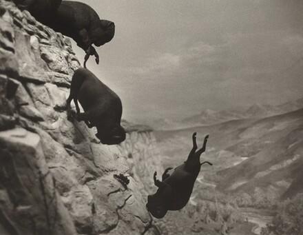 David Wojnarowicz, Untitled (Falling Buffalos), 1988-19891988-1989